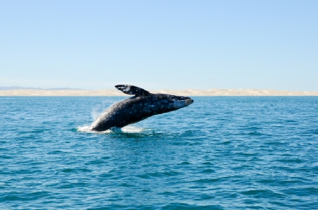 Cape Town Whale Watching
